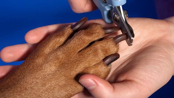 стрижка когтей у собак